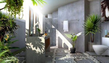 cây trồng trong nhà vệ sinh